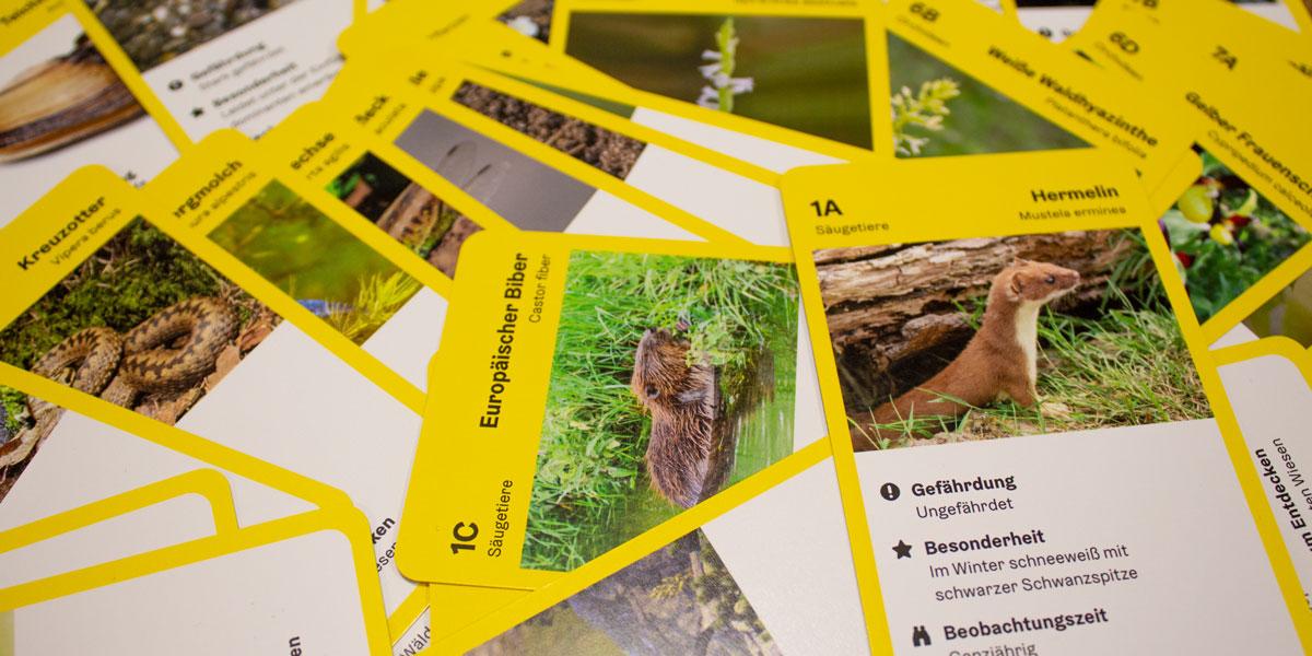 dsignery_Tourismus_Spielkarten